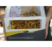 Шмелиная семья (Bombus terrestris) - Пчеловодство в Симферополе