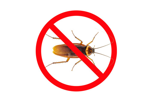 Дезинсекция! Уничтожение тараканов в Алупке! Гарантия 100 % результата! Безопасно! Без запаха!Жмите!, фото — «Реклама Алупки»
