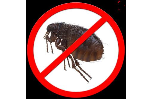 Дезинсекция! Уничтожение блох в Алупке! Гарантия 100 % результата! Безопасно! Без запаха! Жмите!, фото — «Реклама Алупки»