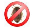 Дезинсекция! Уничтожение кожееда в Алупке! Гарантия 100 % результата! Безопасно! Без запаха!Жмите!, фото — «Реклама Алупки»
