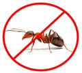 Дезинсекция! Уничтожение муравьева в Алуште! Гарантия 100 % результата!Безопасно! Без запаха! Жмите! - Клининговые услуги в Алуште