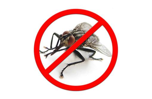Дезинсекция! Уничтожение мух в Алуште! Гарантия 100 % результата! Безопасно! Без запаха! Жмите! - Клининговые услуги в Алуште