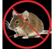 Дератизация! Уничтожение мышей в Алуште! Умирают на улице! Без запаха! Безопасно! Жмите! - Клининговые услуги в Крыму