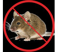 Дератизация! Уничтожение мышей в Алуште! Умирают на улице! Без запаха! Безопасно! Жмите! - Клининговые услуги в Алуште