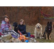 Передержка, активный выгул и развивающие занятия для собак - Дрессировка, передержка в Севастополе