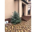 Продается дом г. Симферополь,ул. Лизы Чайкиной - Дома в Крыму