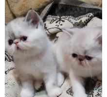 девочка экзоточка ждёт родителей - Кошки в Феодосии
