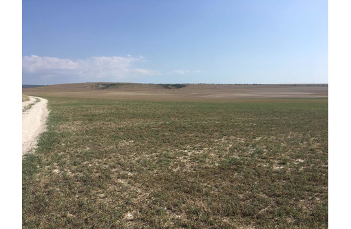 Продам земельный участок 10 гектар +5 га в селе Тургеневка Бахчисарайский район, фото — «Реклама Бахчисарая»
