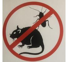 дезинсекция профессиональное уничтожение тараканов - Клининговые услуги в Севастополе