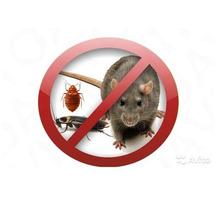 Уничтожение тараканов, грызунов, плесени - Клининговые услуги в Севастополе