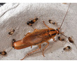 Уничтожение тараканов, блох, клопов, любых насекомых и грызунов. Быстро! Эффективно! Гарантия!, фото — «Реклама Алупки»