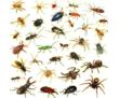 Уничтожение тараканов, блох, крыс до полного выведения, фото — «Реклама Армянска»