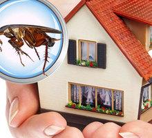 Полное уничтожение насекомых и грызунов - Клининговые услуги в Белогорске