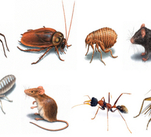 Уничтожаем насекомых, вредителей, продажа дезсредств по Крыму и Севастополю - Клининговые услуги в Джанкое