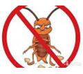 Профессиональное уничтожение насекомых,грызунов Алушта - Клининговые услуги в Алуште