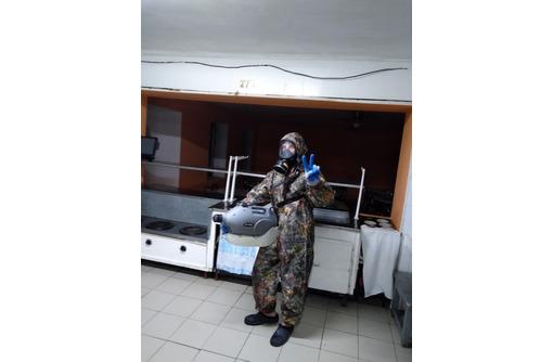 Дезинфекция, дезинсекция, дератизация в Севастополе, фото — «Реклама Севастополя»