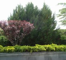 Требуется озеленитель с опытом работы - Сельское хозяйство, агробизнес в Севастополе