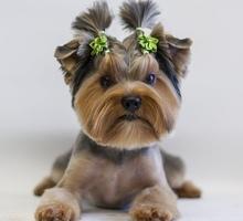 Стрижка кошки, собаки всего 700 руб. - Груминг-стрижки в Крыму