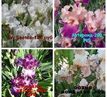 Красивые сортовые ирисы различных окрасок - Саженцы, растения в Севастополе