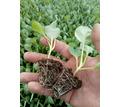 Стимулятор роста растений - органическое удобрение ПроРостим - Грунты и удобрения в Керчи