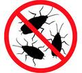 Дератизация, дезинфекция, дезинсекция. Уничтожение насекомых и грызунов. Дезинфектор. - Клининговые услуги в Алупке