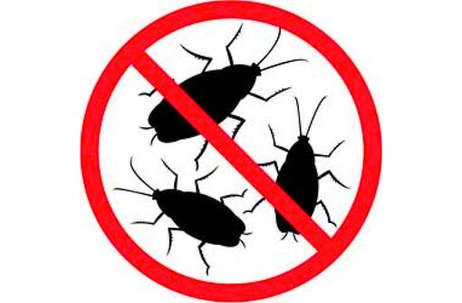 Дератизация, дезинфекция, дезинсекция. Уничтожение насекомых и грызунов. Дезинфектор., фото — «Реклама Севастополя»