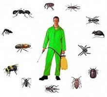 Уничтожение насекомых и грызунов. Дезинфекция, дезинсекция, дератизация. Профессионал Дезинфектор. - Клининговые услуги в Белогорске