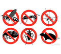 Дератизация, дезинфекцмя, дезинсекция. Уничтожение насекомых и грызунов. Дезинфектор. - Клининговые услуги в Алупке