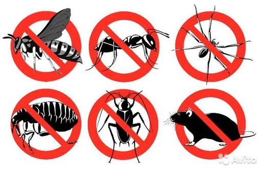Уничтожение насекомых и грызунов. Дезинфекция, дезинсекция, дератизация. Профессионал Дезинфектор., фото — «Реклама Бахчисарая»