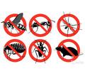 Уничтожение насекомых и грызунов. Дезинфекция, дезинсекция, дератизация. Профессионал Дезинфектор. - Клининговые услуги в Бахчисарае