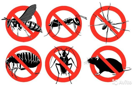 Уничтожение насекомых и грызунов. Дезинфекция, дезинсекция, дератизация. Профессионал Дезинфектор. - Клининговые услуги в Красноперекопске
