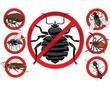 Уничтожение насекомых и грызунов. Дезинфекция, дезинсекция, дератизация. Профессионал Дезинфектор., фото — «Реклама Фороса»
