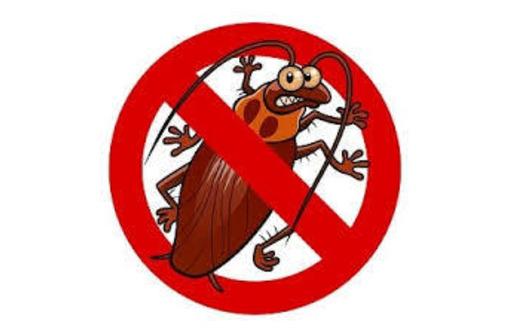 Уничтожение насекомых и грызунов. Дезинфекция, дезинсекция, дератизация. Профессионал Дезинфектор., фото — «Реклама Алупки»