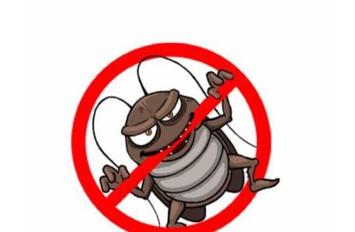 Профессиональные услуги дезинфектора. Уничтожение грызунов, насекомых и микроорганизмов. Дезинфекция, фото — «Реклама Алупки»