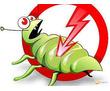 Дезинфекция, дератизация, дезинсекция. Истребление тараканов, клещей, клопов, мышей, крыс, кротов, фото — «Реклама Фороса»