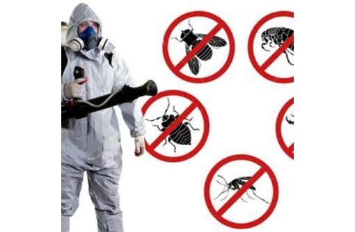 Дезинфекция. Услуги профессионального дезинфектора. Уничтожаем насекомых, грызунов, микроогрганизмы, фото — «Реклама Фороса»