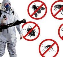 Дезинфекция. Услуги профессионального дезинфектора. Уничтожаем насекомых, грызунов, микроогрганизмы - Клининговые услуги в Форосе