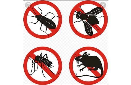 Дезинфекция. Услуги профессионального дезинфектора. Уничтожаем насекомых, грызунов, микроогрганизмы - Клининговые услуги в Красноперекопске