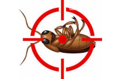 Дезинфекция, дератизация, дезинсекция. Уничтожение тараканов, клещей, клопов, мышей, крыс, кротов, фото — «Реклама Алупки»