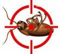 Дезинфекция, дератизация, дезинсекция. Уничтожение тараканов, клещей, клопов, мышей, крыс, кротов - Клининговые услуги в Алуште