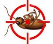 Дезинфекция, дератизация, дезинсекция. Уничтожение тараканов, клещей, клопов, мышей, крыс, кротов, фото — «Реклама Фороса»