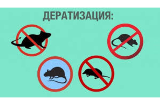 Дератизация. Полное уничтожение мышей, крыс, кротов и других грызунов - Клининговые услуги в Красноперекопске