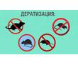 Дератизация. Полное уничтожение мышей, крыс, кротов и других грызунов, фото — «Реклама Фороса»