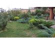 Растения в Севастополе. Садовый центр «Сабаль». Дарим красоту и душевный комфорт!, фото — «Реклама Севастополя»