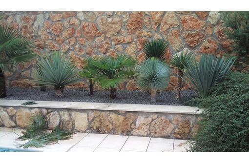 Растения в Севастополе. Садовый центр «Сабаль». Дарим красоту и душевный комфорт! - Ландшафтный дизайн в Севастополе