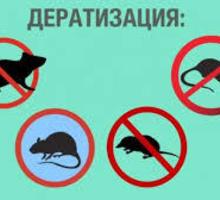 Дератизация.  Уничтожаем грызунов (мышей, крыс, кротов). Дезинсекция, Дезинфекция. - Клининговые услуги в Белогорске