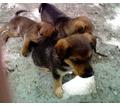 СОС!!! Очень срочно!!! Спасти жизни!!! - Собаки в Бахчисарае