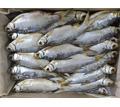 Тарань вяленая - Продукты питания в Севастополе