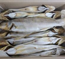Судак вяленый - Продукты питания в Севастополе