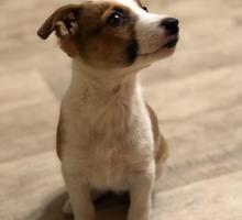Отдам щенка - Отдам в добрые руки в Евпатории